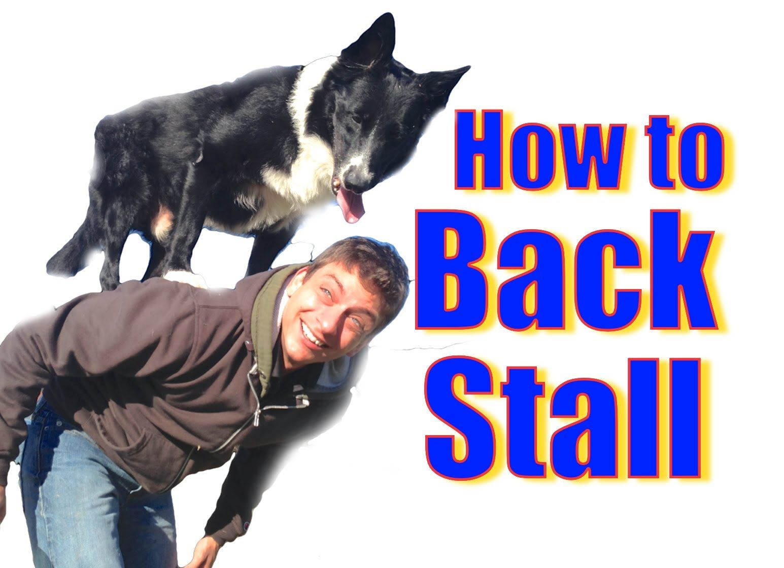 How To Teach Your Dog To Stand On Your Back The Back Stall