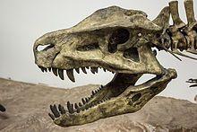 Postosuchus skull cast