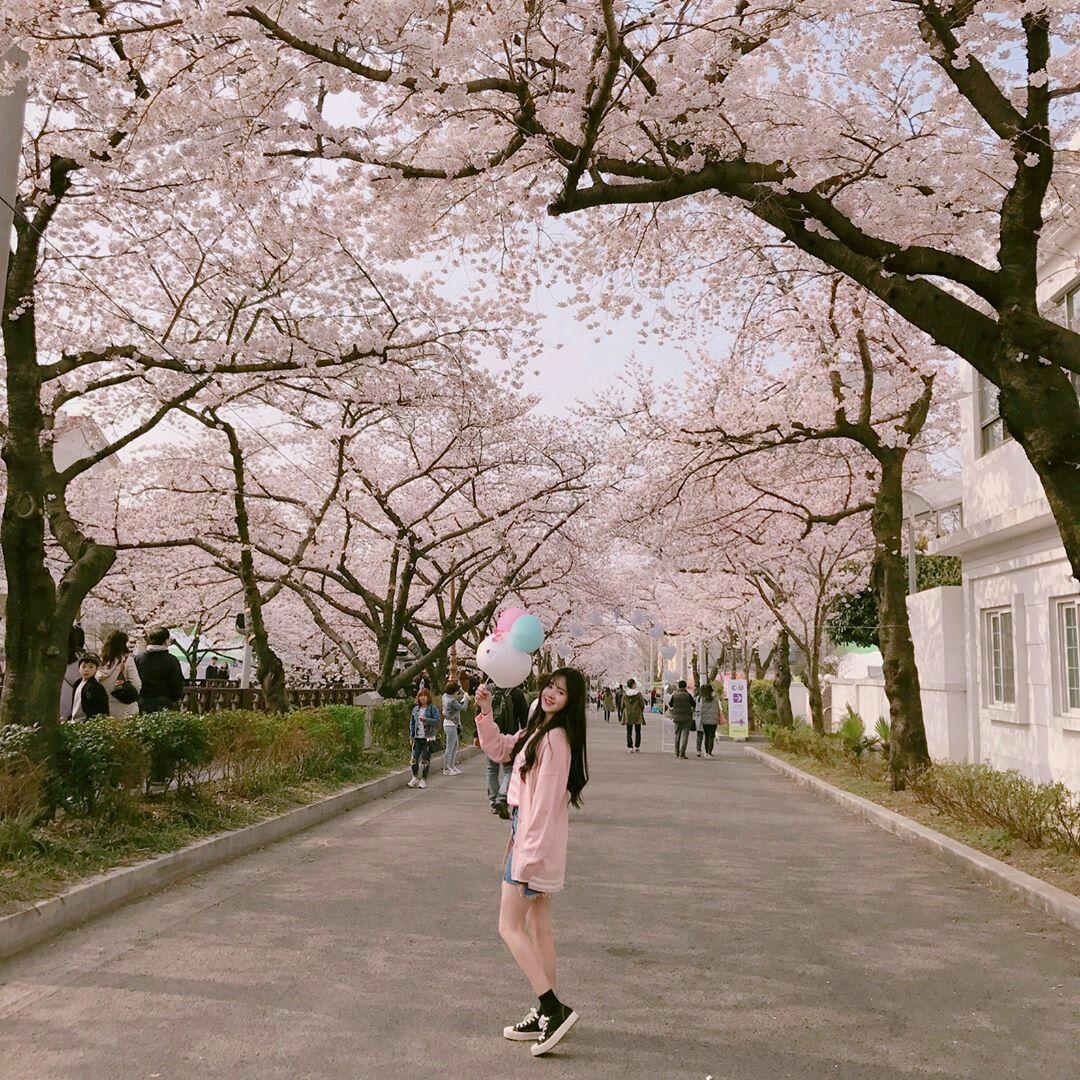 Cherry Blossom Aesthetic Pink Korea Girl Aesthetic Girl Girl Korea Ulzzang Girl