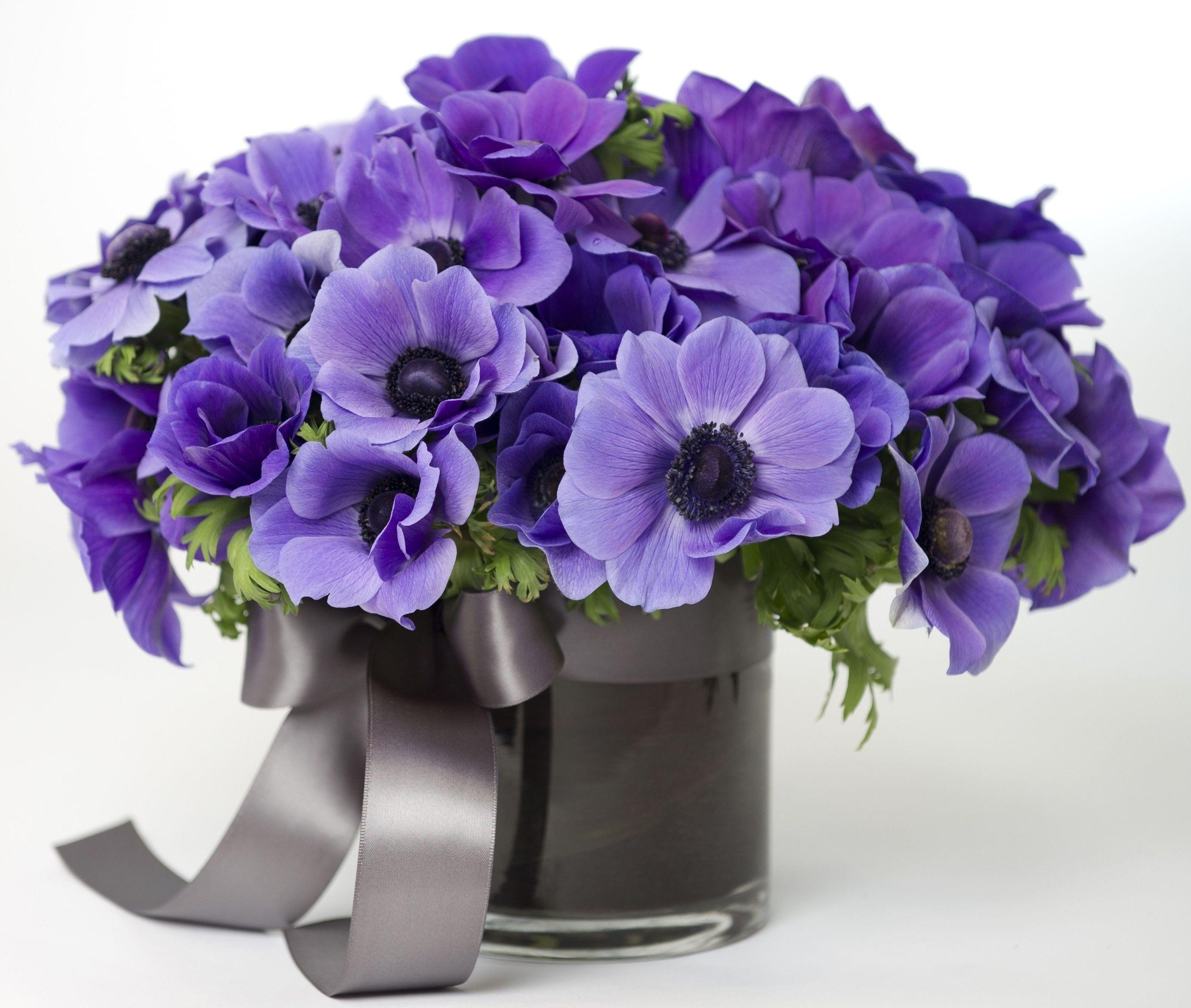 Bouquets Anemones Vase Violet Fond Blanc Fleurs Fleurs Arrangements Ikebana Anemone