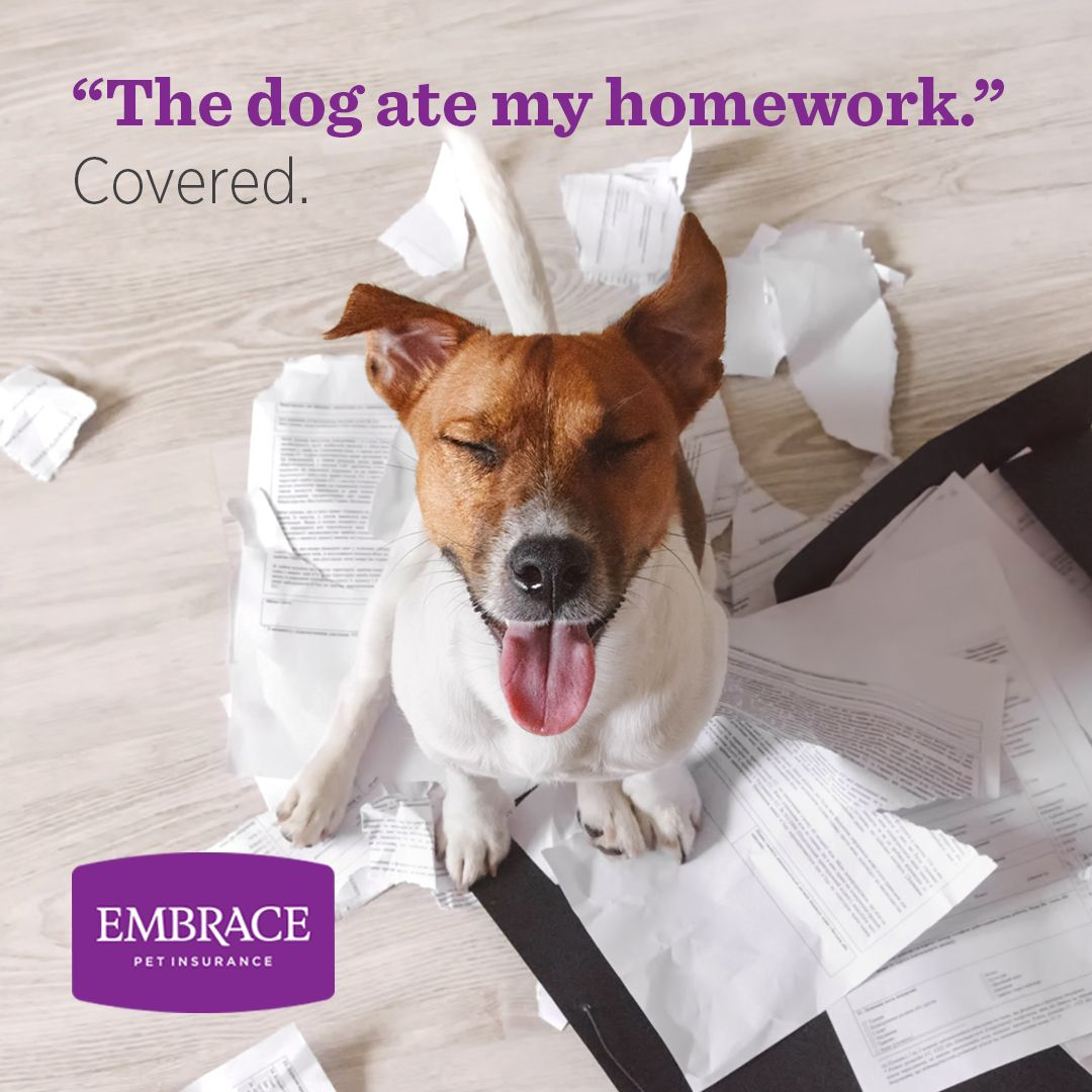 Embrace Pet Insurance is proud to announce our new