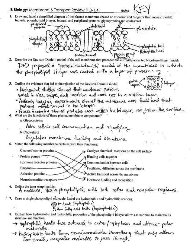 Cell Transport Review Worksheet Answer Key - worksheet