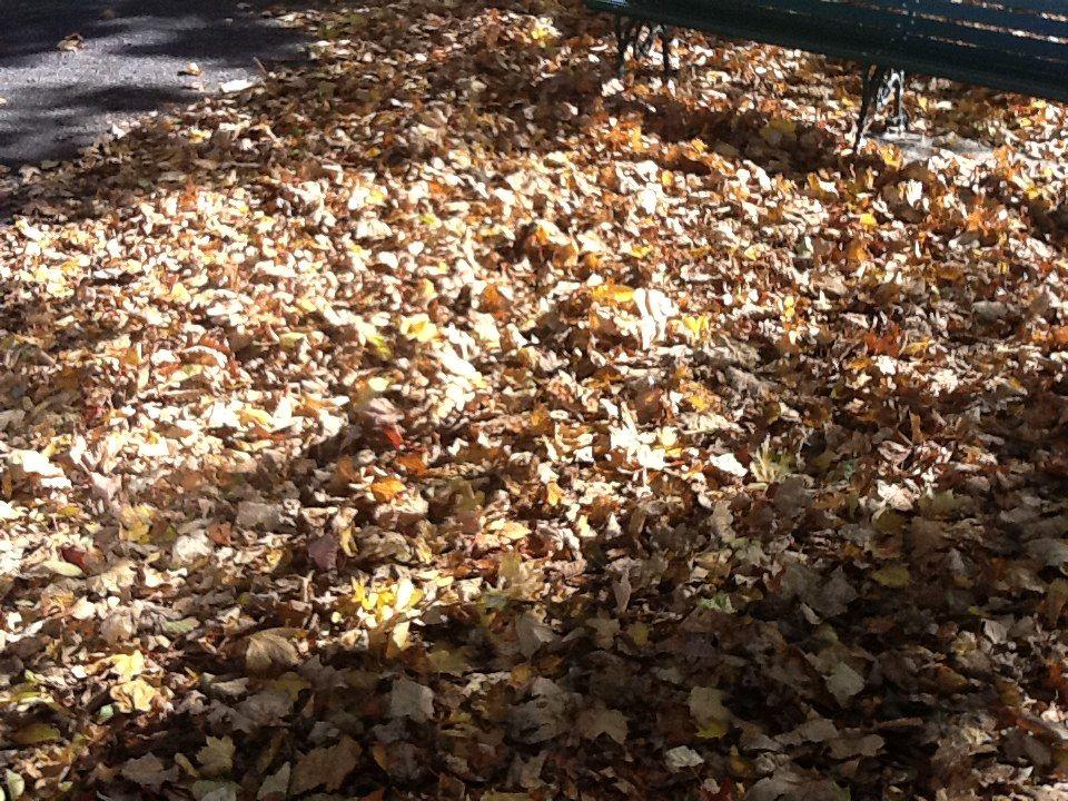 Outono em montreal