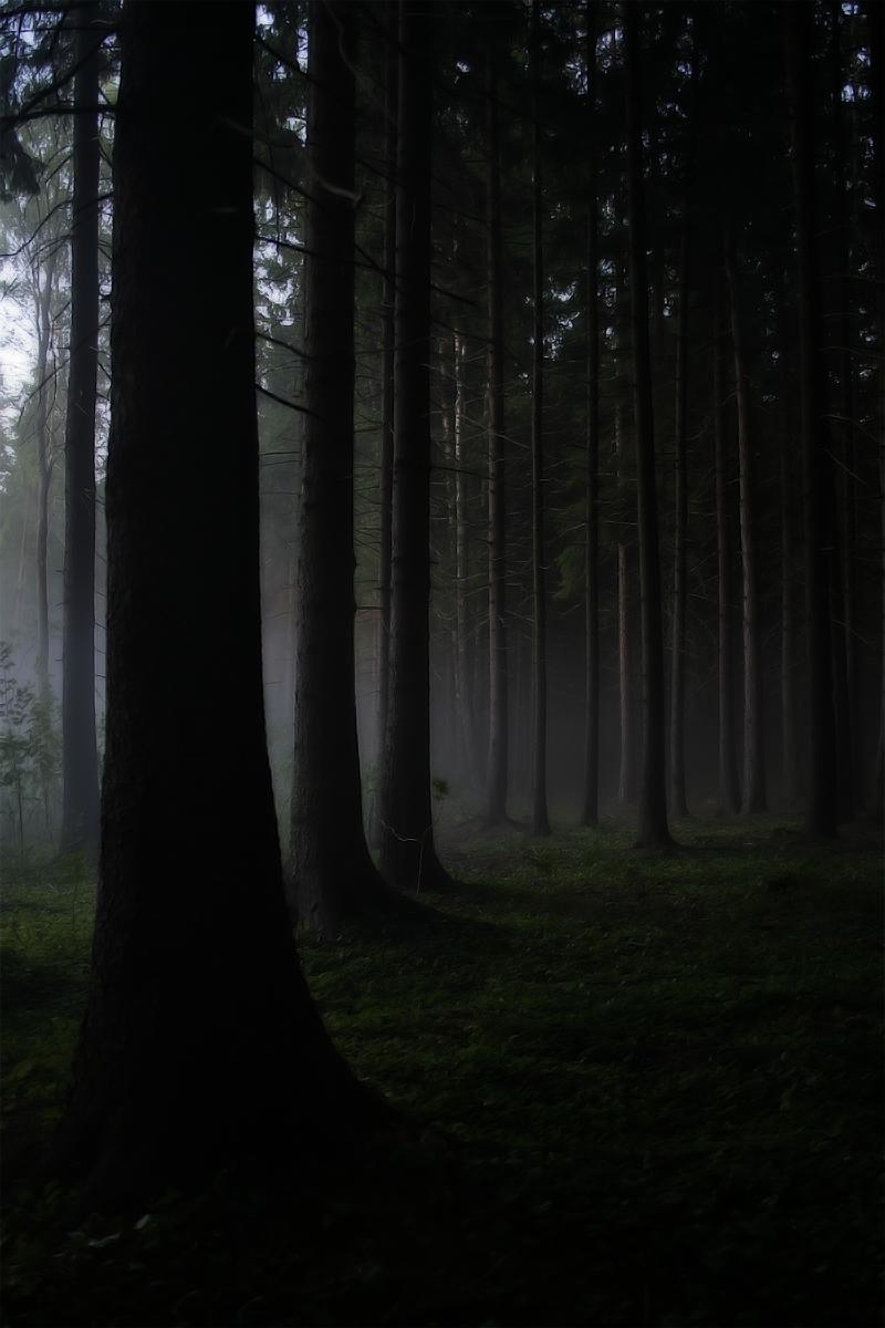 Трое и одна в лесу #4