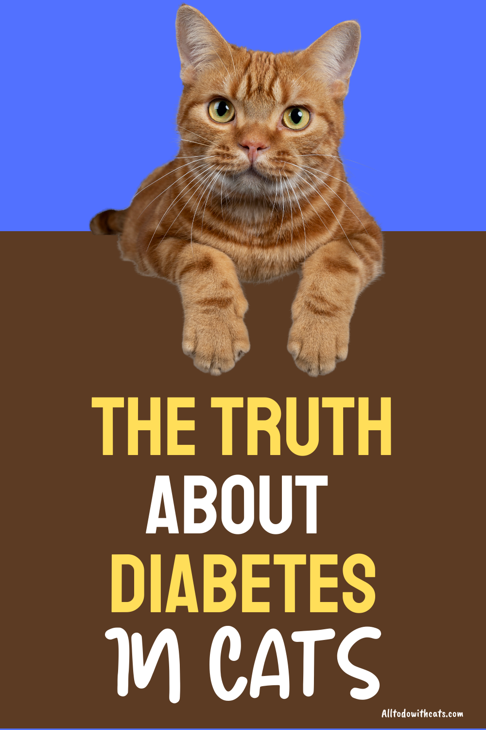 What is Diabetes in cats? (Symptoms, Causes, and