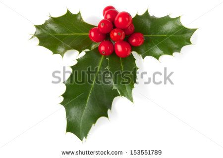 Holly Christmas decoration Clipping path included PARTY