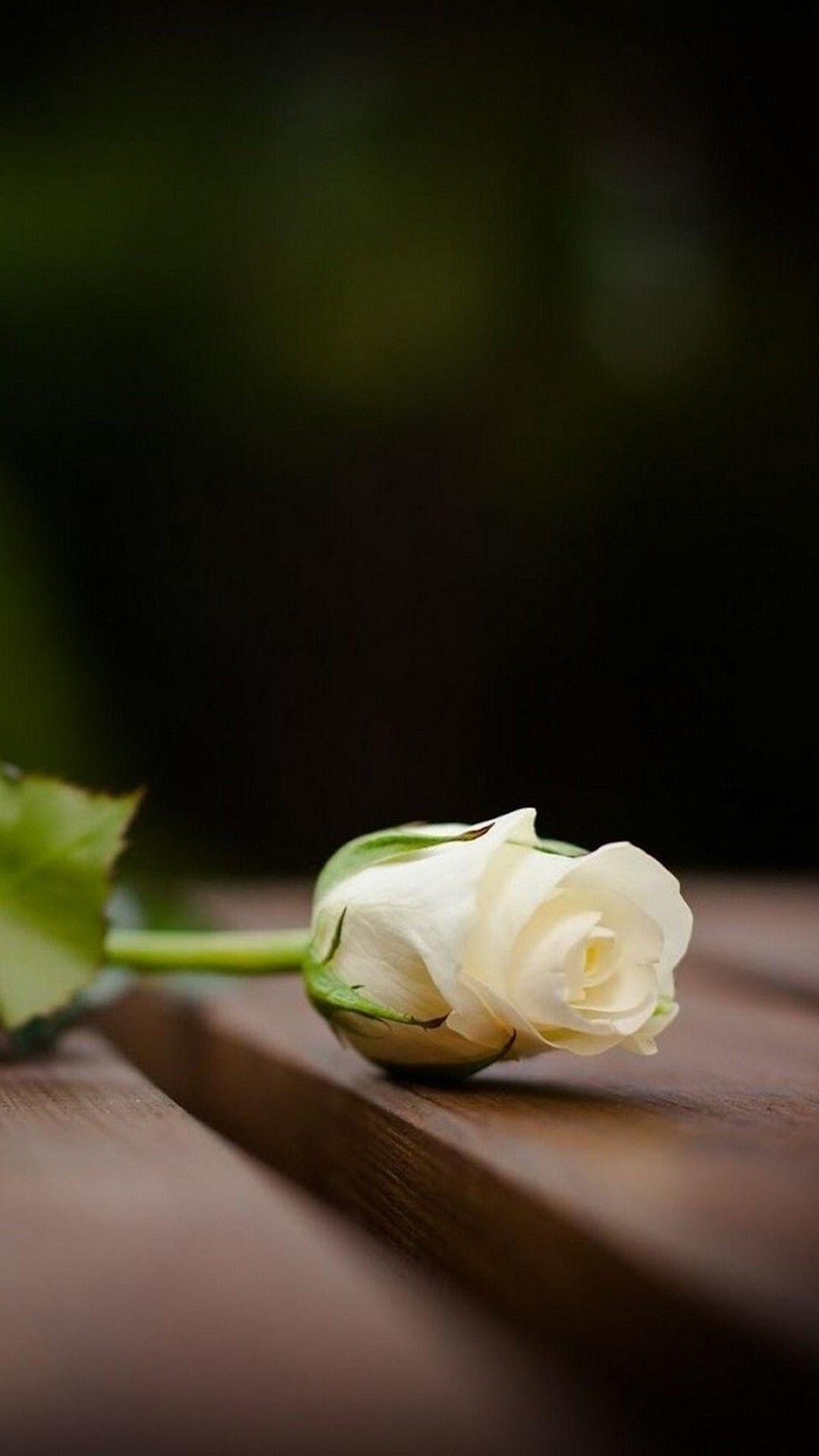 White Flower Mobile Wallpaper Hd Best Hd Wallpapers White Roses Wallpaper Rose Flower Wallpaper Beautiful Flowers Wallpapers