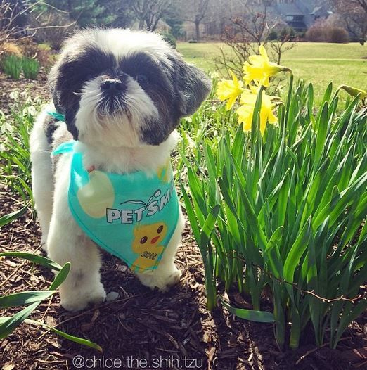 A Fresh Haircut And Some Outdoor Frollicking Makes Sundayfunday Even Better Petsmartgrooming Photo Credit Chloe The Cat Grooming Cute Animals Dog Grooming