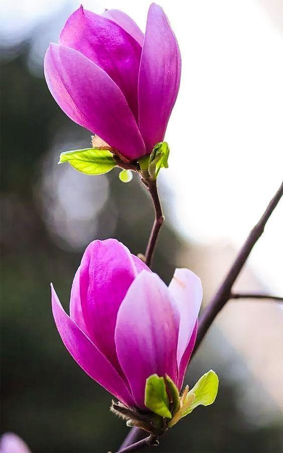 """,, BEAUTIFUL """"   Blumen, Blumen malen, Liebe blumen"""
