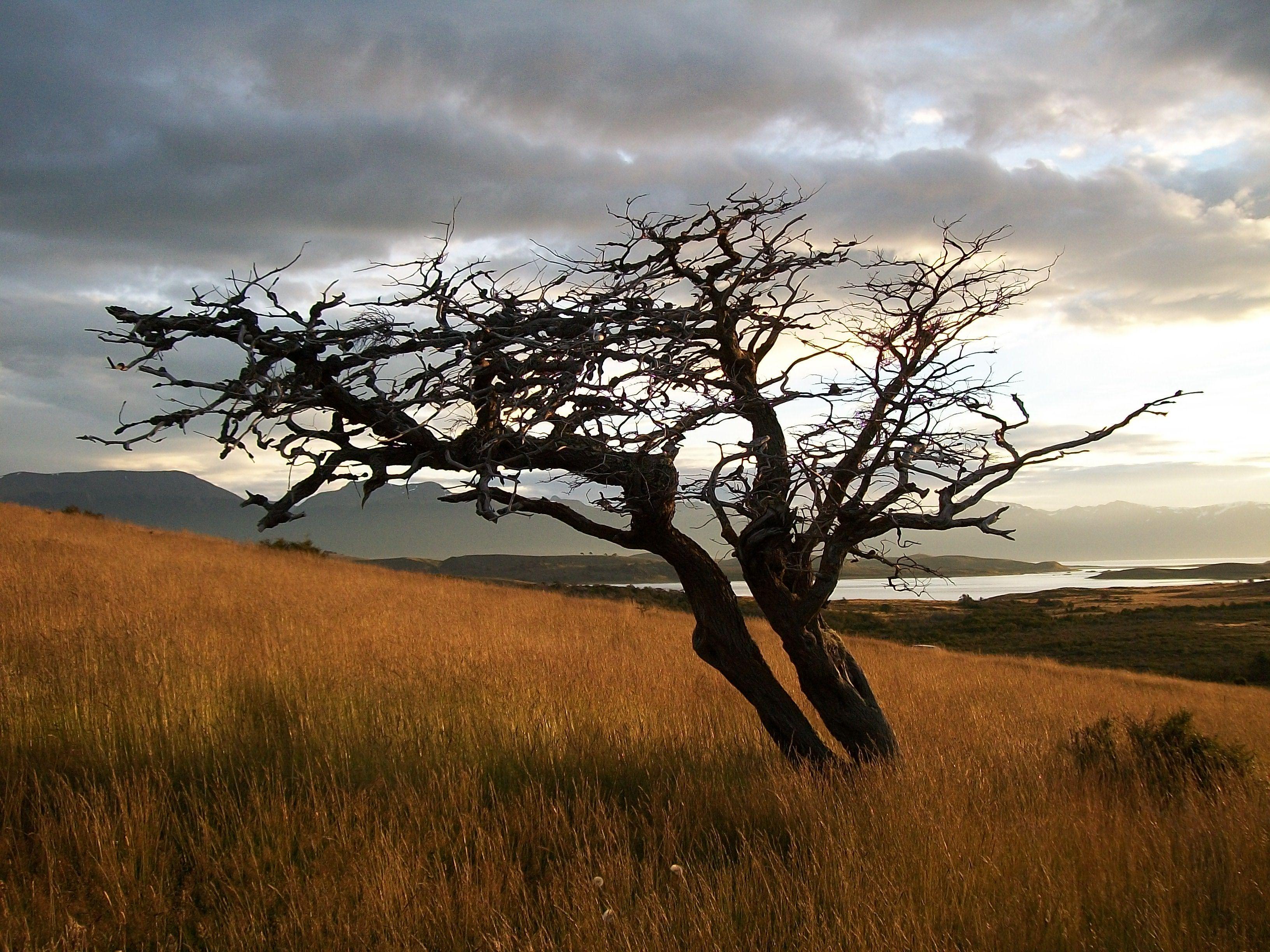 arboles de la patagonia에 대한 이미지 검색결과