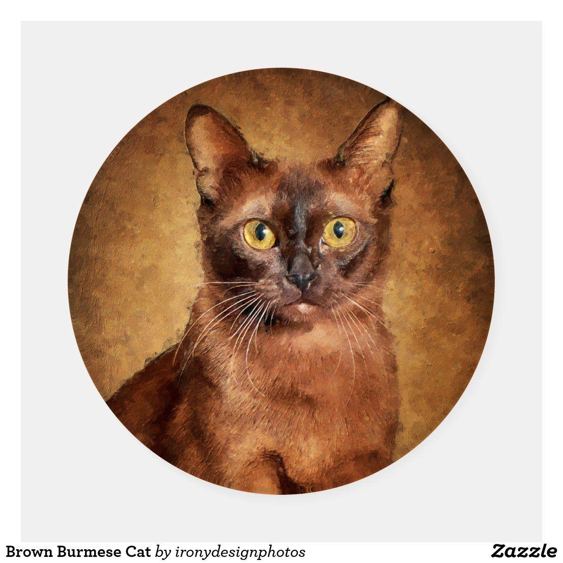 Brown Burmese Cat Coaster Set Zazzle Com In 2020 With Images Burmese Cat Cat Coasters Cat Art Painting