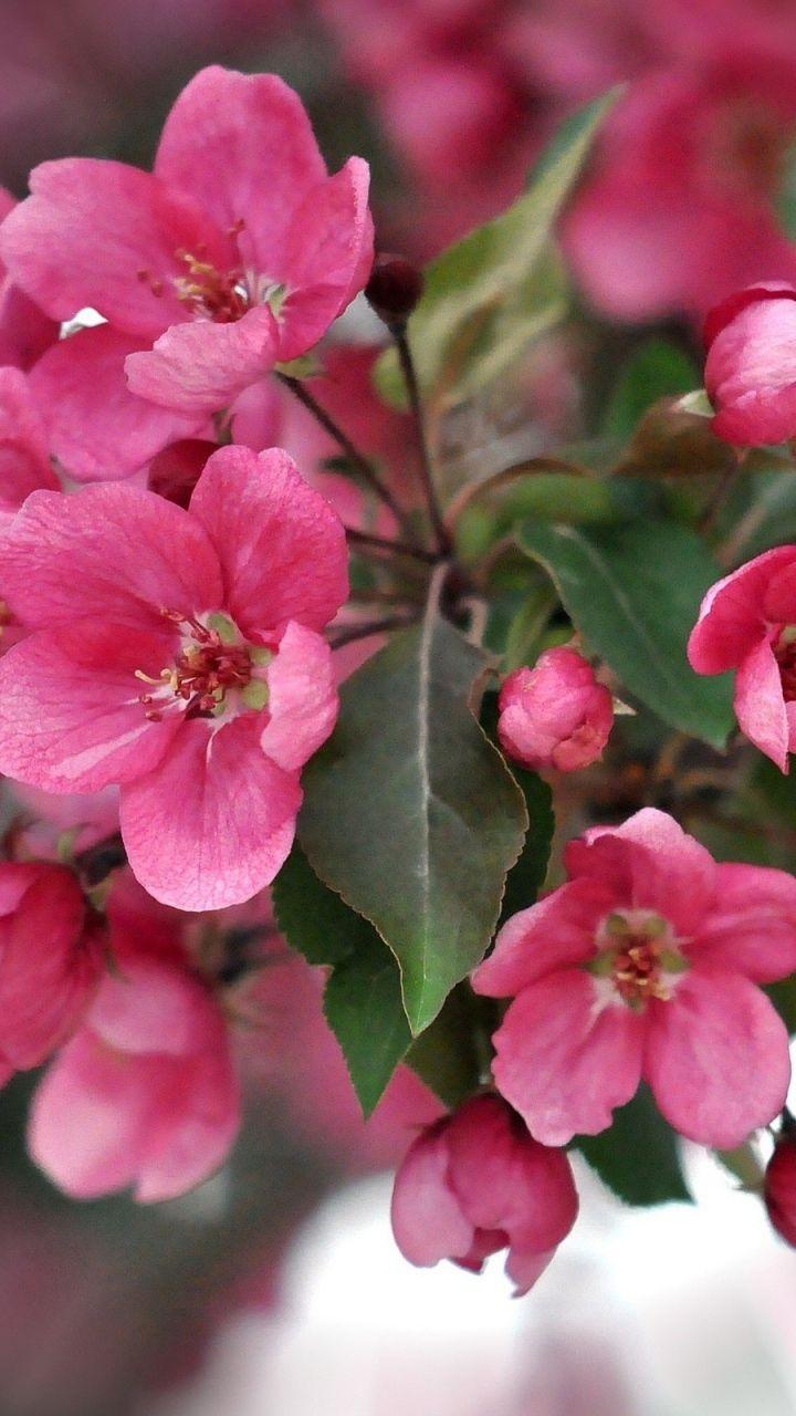 720x1280 Wallpaper color, pink, petals, plant