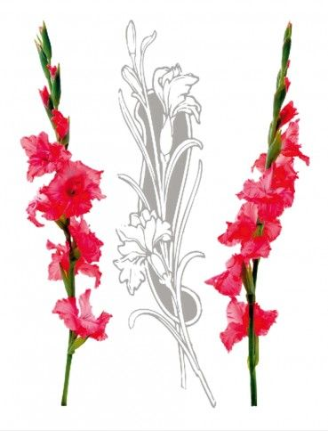 Flowers Red Gladiolus Sword Lilies Gladiolus Tattoo Lilies Drawing Flower Drawing