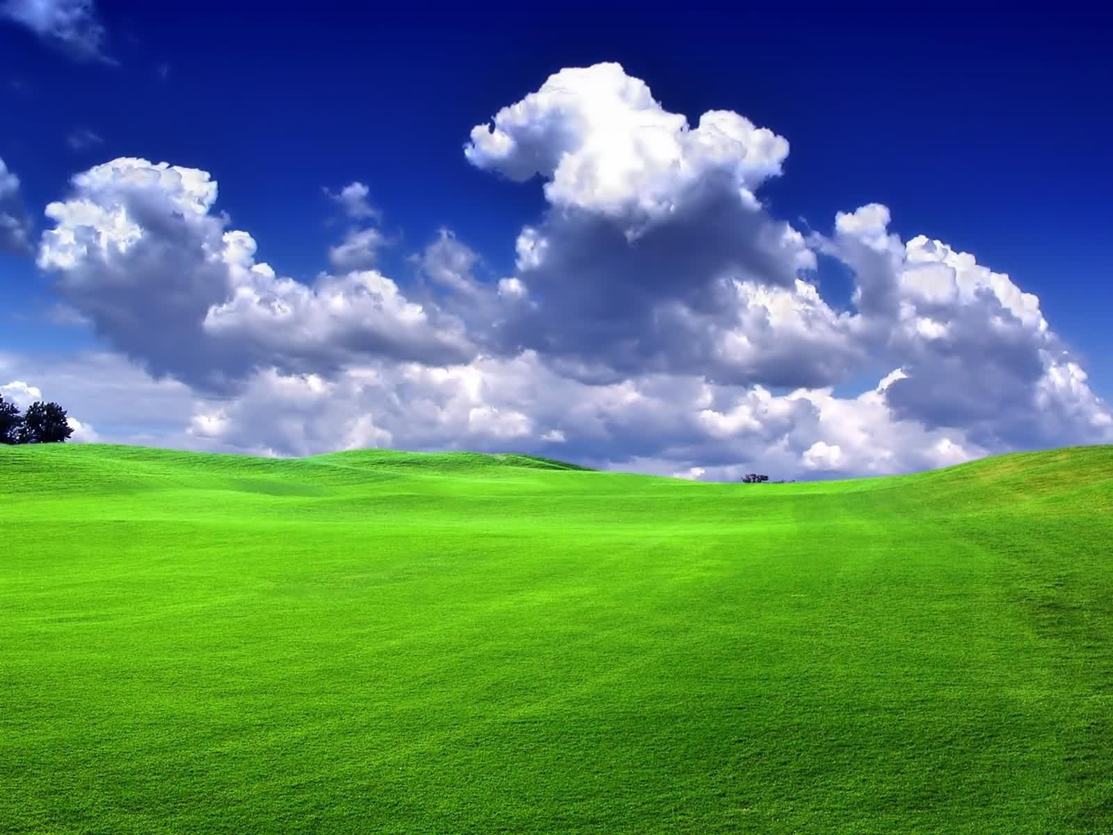 I miss the soft green grass in IllinoisI love it LOVE IT