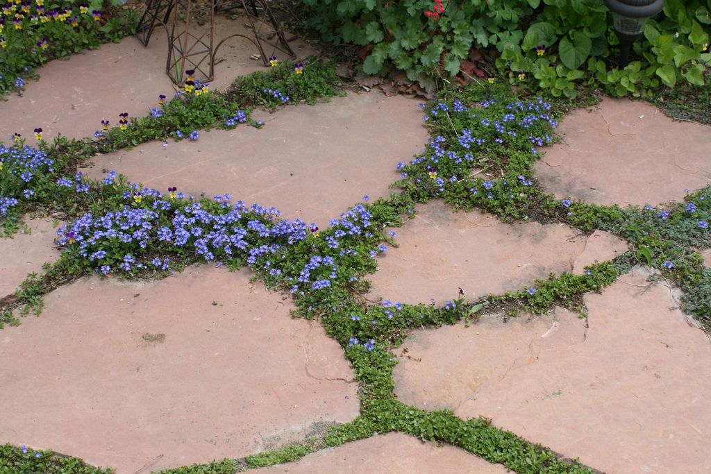 Flagstone Patio Groundcovers | by patrick_standish