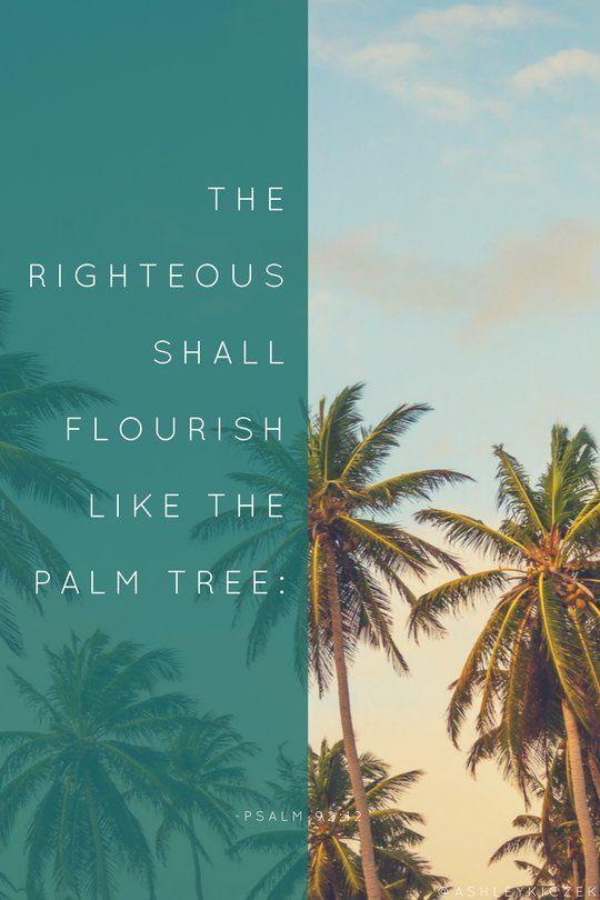 The Righteous Shall Flourish Like Palm Trees Psalm 9212 Catholic