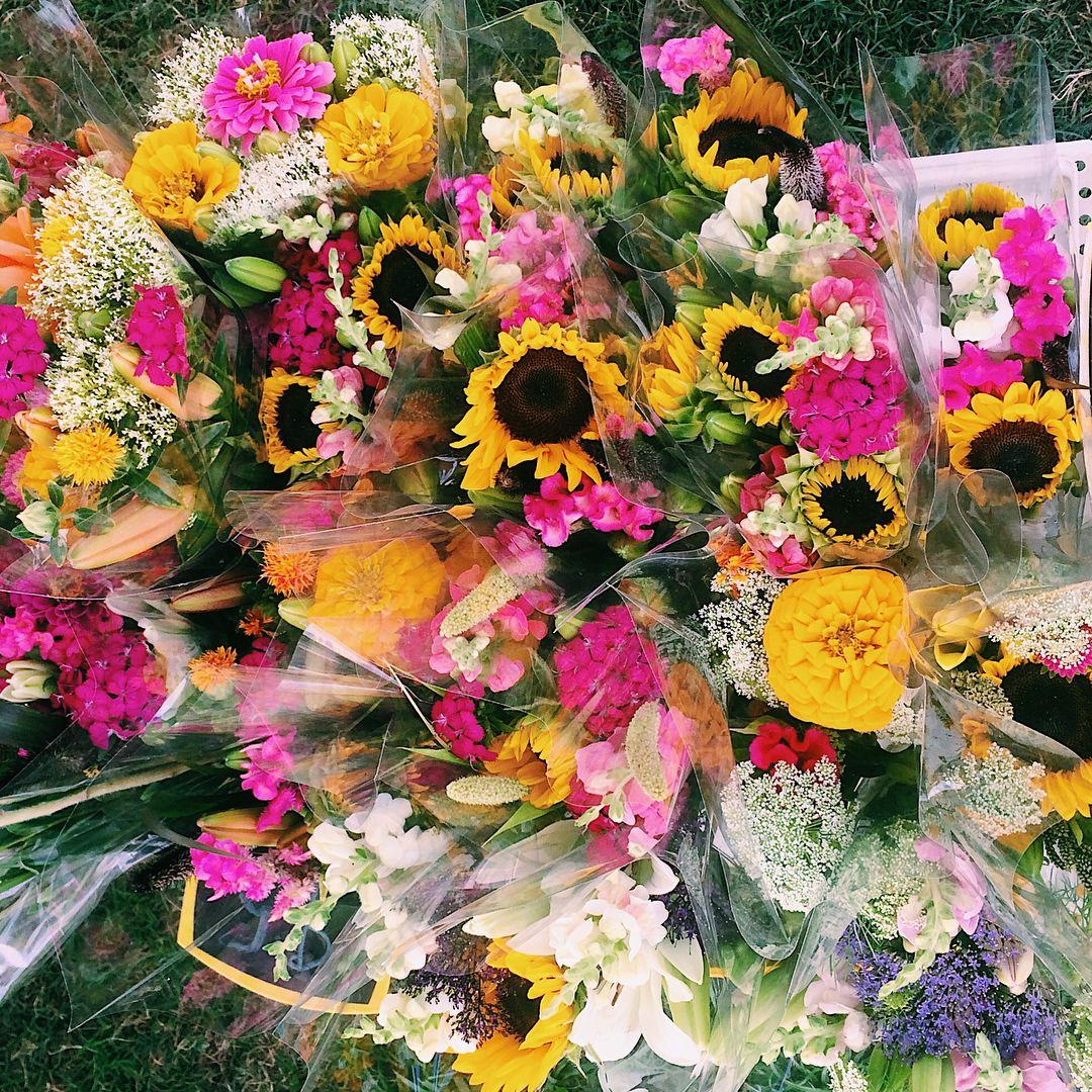 Veni vidi amavi grow pinterest flora and flowers