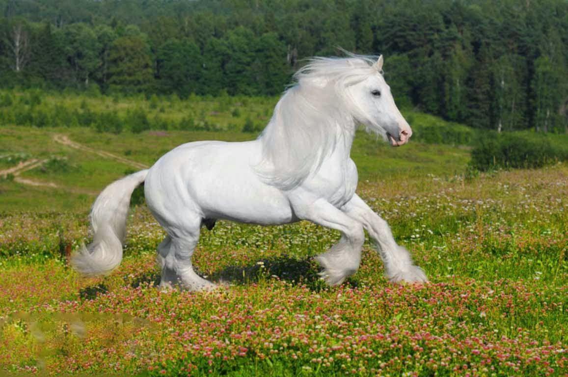 Download Wallpaper Horse Green - e16ee4cc750c4253ab975f9c8c818649  You Should Have_939781.jpg