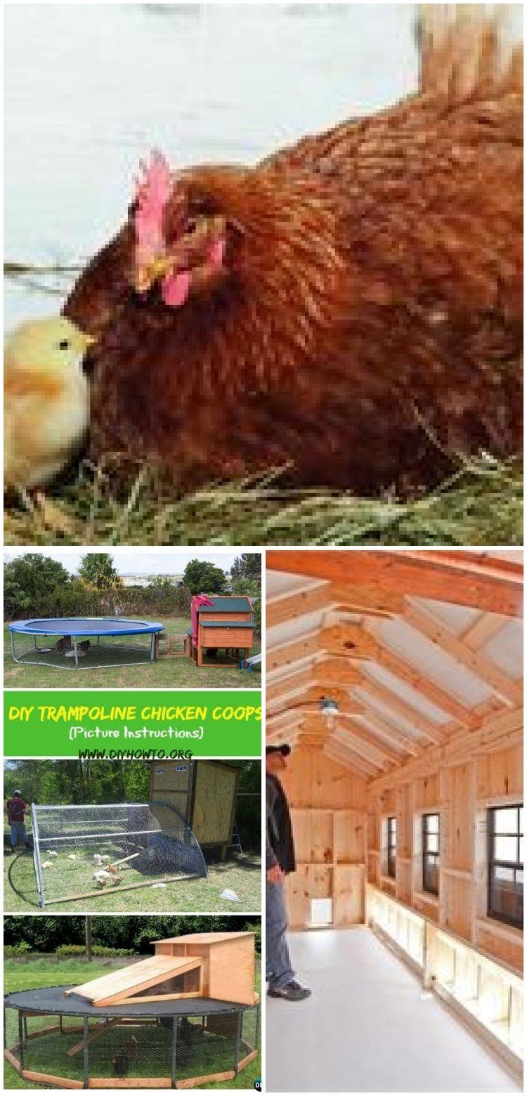 Diy trampoline chicken coop give your old trampoline a ne