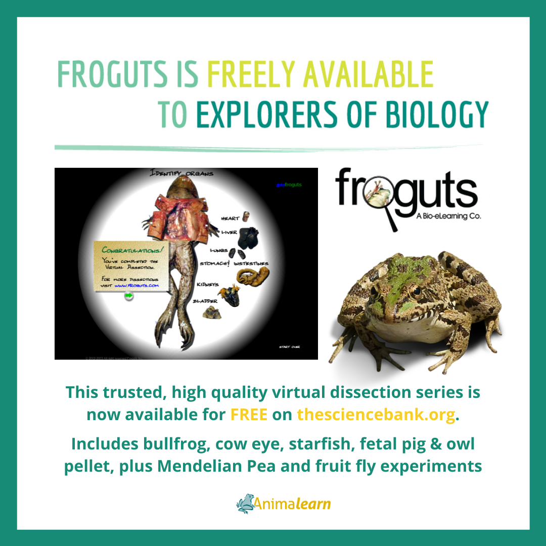Calling All Science Teachers Froguts Is Free In
