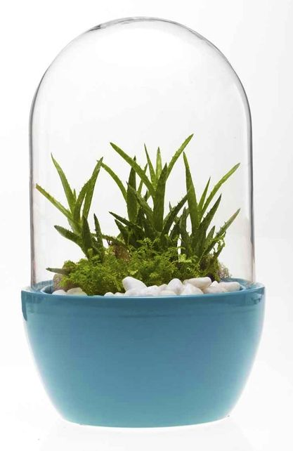 Pill Terrarium in Teal - Habitat Design Store