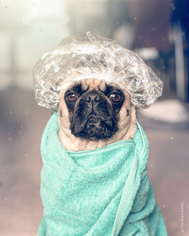 Pin Em Doggie Day Bath