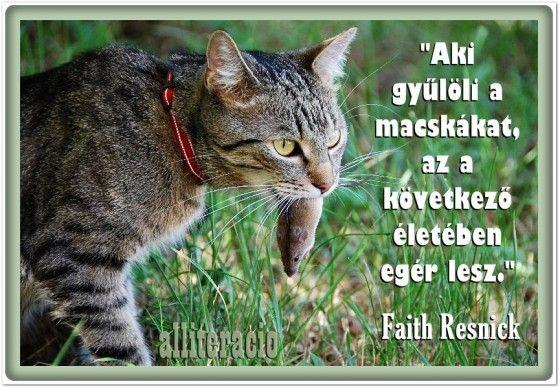 cicás idézetek képekkel Cicás idézetek   képekkel | Animals, Cats, Cute cats