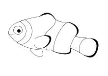 Nemo Clownfisch Kommunion Clownfisch Fische Und Nemo