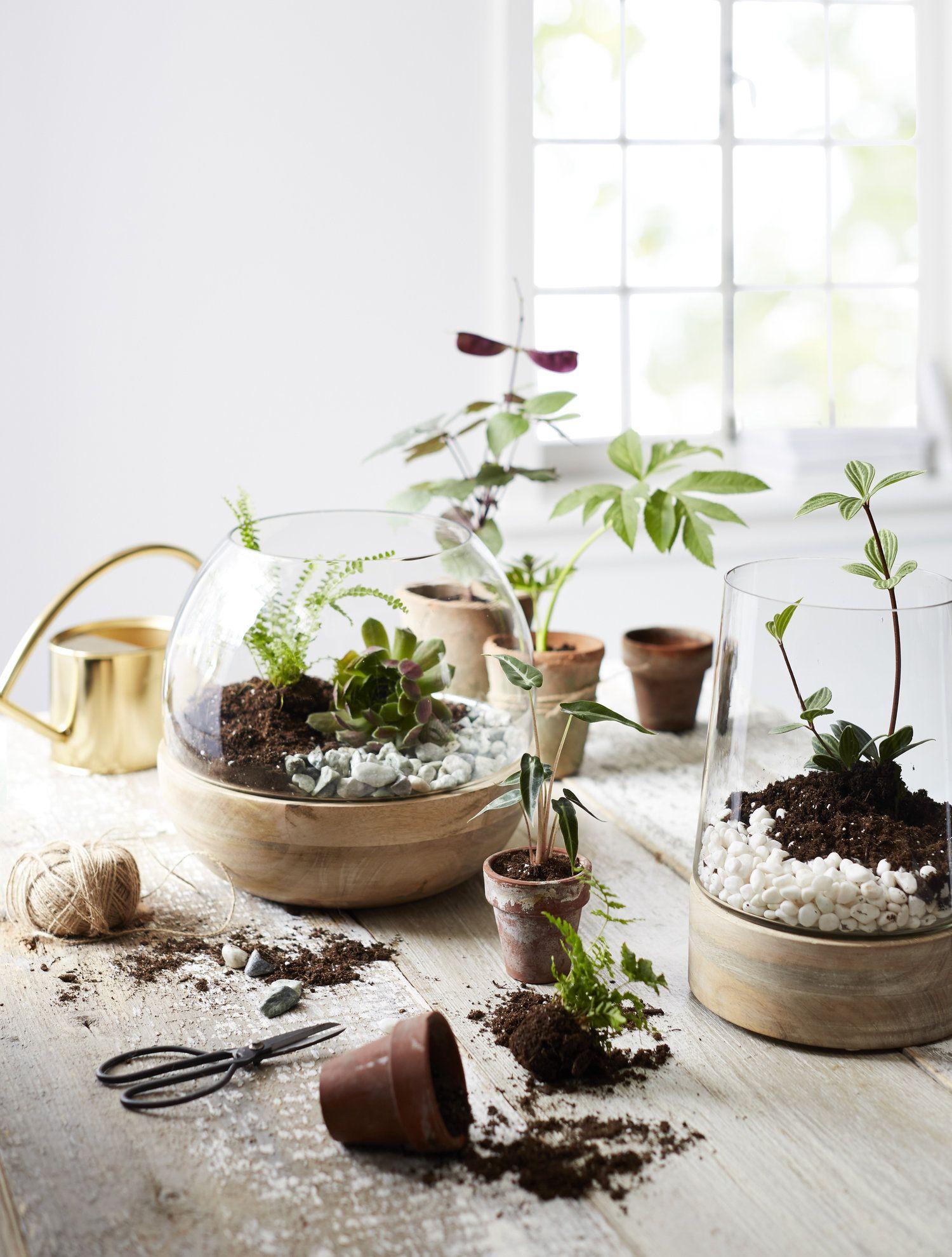 Terrarium Fermé Plante Grasse c-000271-01-048_terrarirums_shot3_v1cropped | plante