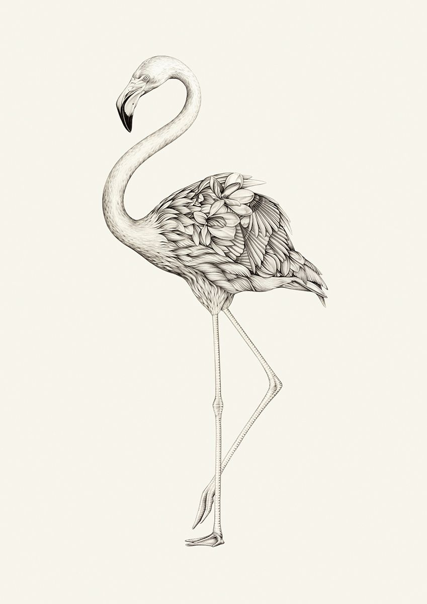 Flora flamingo mvmxm flamingo tattoo flamingo art flamingo