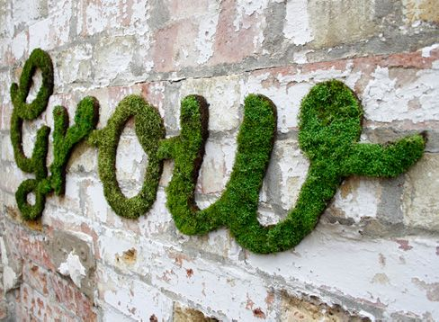 Graffiti moss. Creating an environment in which moss can grow in the urban setting.  (Kailey)