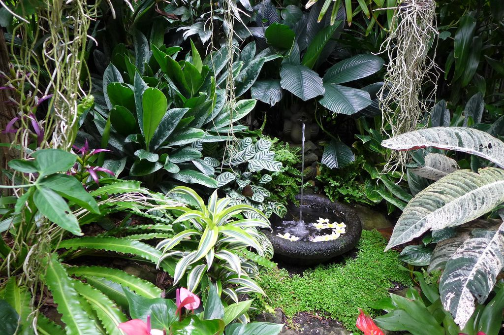 Small Water Basin Surrounded By Tropical Foliage Plants Foliage Plants Plants For Shady Areas Tropical Garden Design