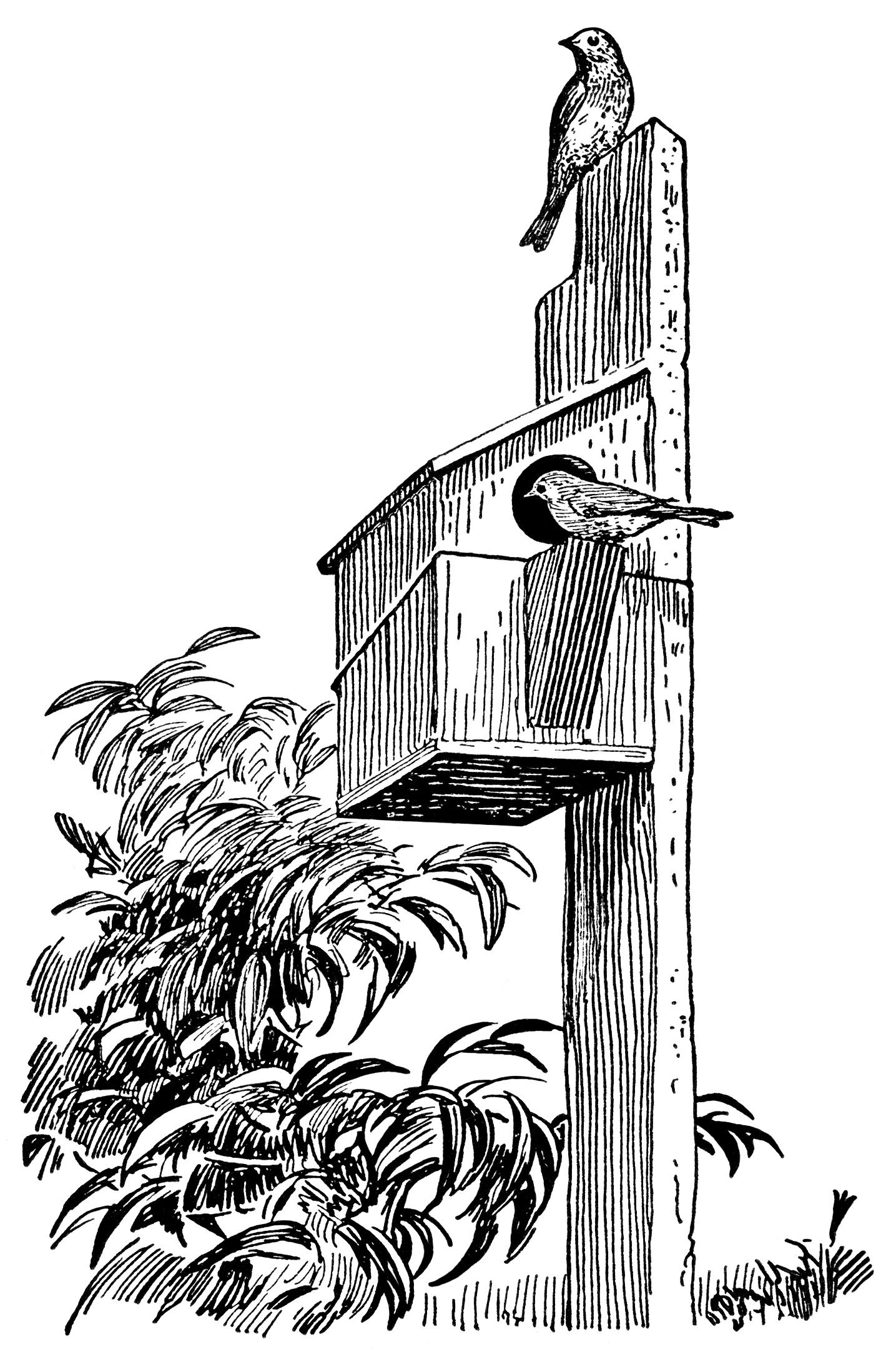 free bird house coloring pages | Birds and Birdhouse ~ Free Vintage Clip Art | Black and ...