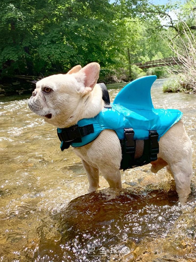 Cute Dog Swimming Vest Suit Bulldog Swimwear Dog