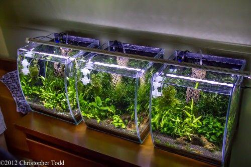 Julie's 5.5 gallon shrimp tanks
