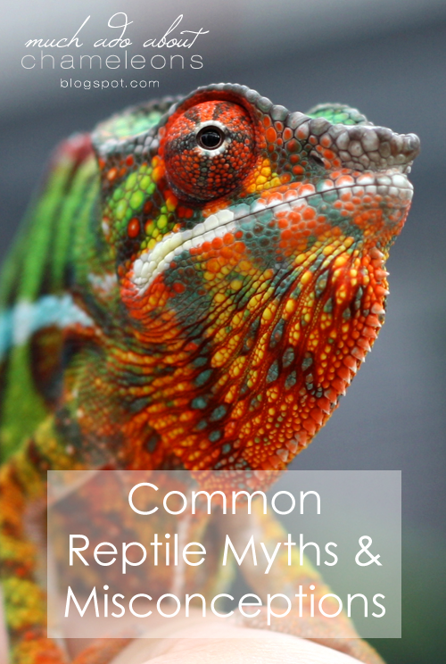 Common Reptile Myths and Misconceptions, especially regarding ...