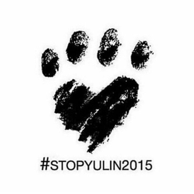 Então gente como tem mais de 100.000.00 de pessoas usando a hashtag #stopyulin2015 Eu também vou usar Na China eles pregam mais de 10.000 cães Em lares, ruas para mata-los e faze-los de carne e não podemos permitir isso porque isso é um Absurdo cães não foram feitos para comer, foram feitos para viver e encher a casa de ALEGRIA Vamos ajudar? Só reposte essa ou qualquer foto Com a hashtag Stopyulin2015  Vamos vencer! Reposte this photo with the hashtag #stopyulin2015