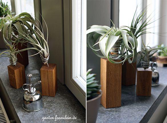 Tillandsien deko air plants pflanzen fenster und balkon - Tillandsien deko ...