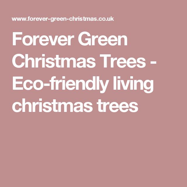 Forever Green Christmas Trees - Eco-friendly living christmas trees