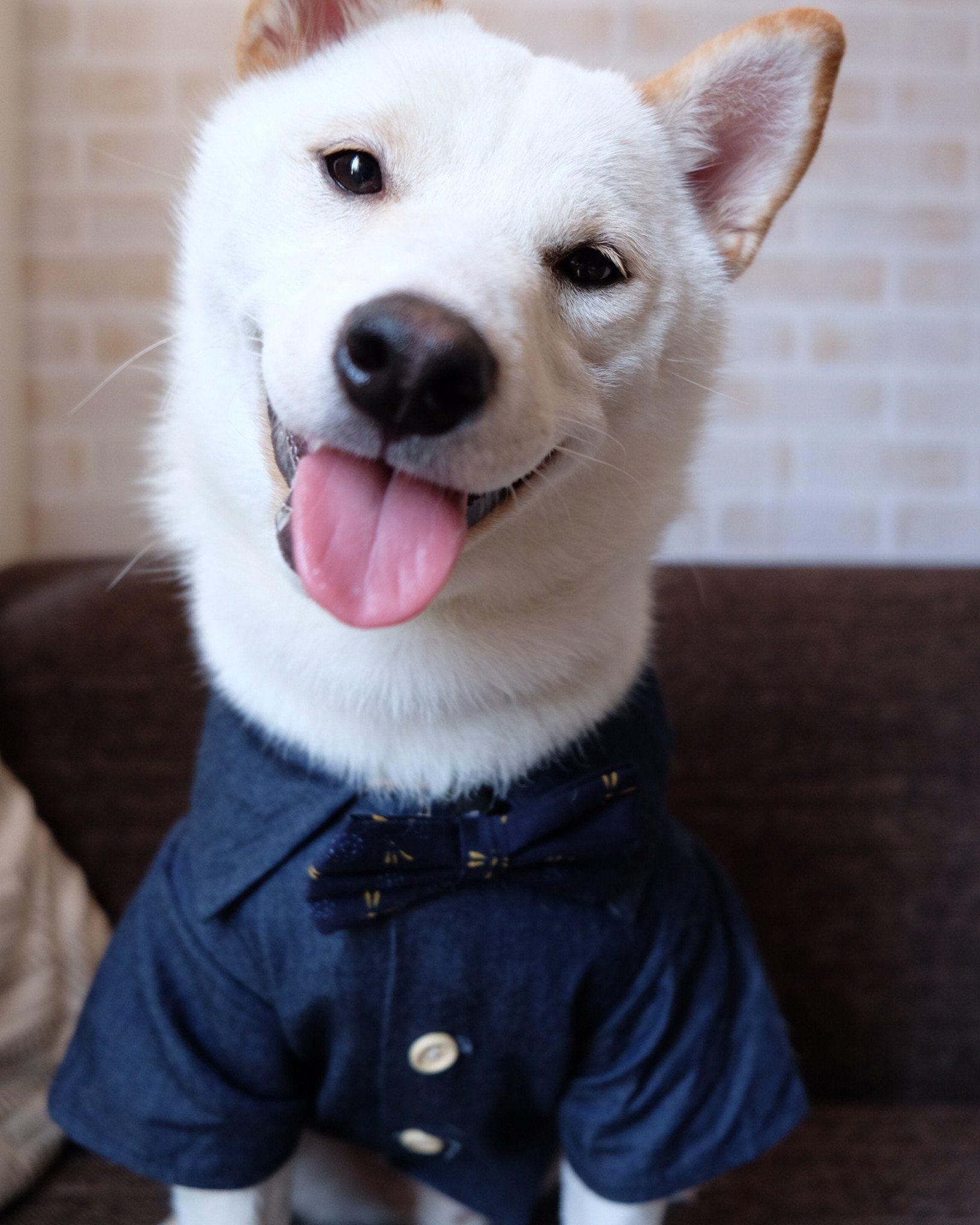 Canadian Tuxedo (With images) Canadian tuxedo, Cute dog