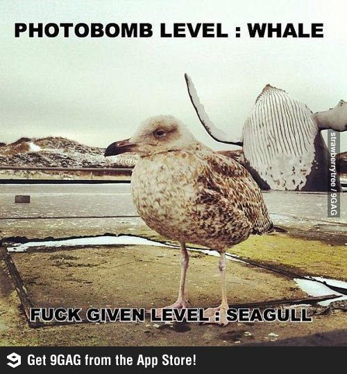 Photobombing level: whale; Fuck given level: Seagull