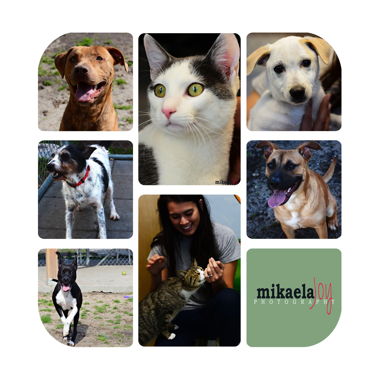 Weekly Adoptables Mikaela Joy Savannah Lifestyle