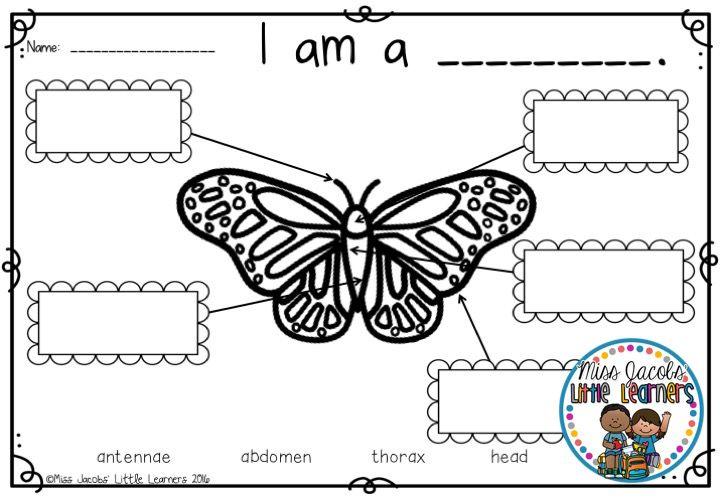 Butterflies: A Butterfly & caterpillar nonfiction unit