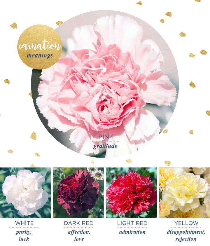 Carnation Meaning And Symbolism Ftd Com Carnation Flower Meaning Flower Meanings Carnation Meaning