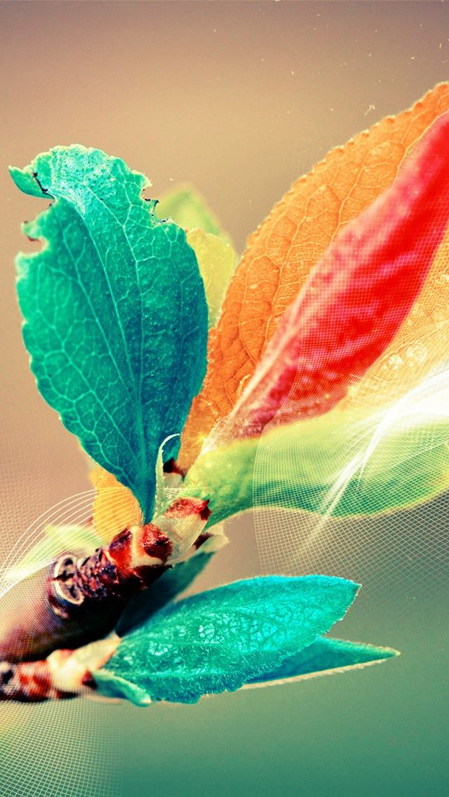 Hd Color Leaves New Wallpaper Iphone Nature Iphone Wallpaper Pop Art Wallpaper Iphone whatsapp wallpaper nature