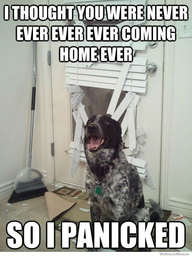 Things Your Pets Do While You're Away | Animals | Funny dog