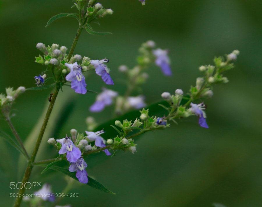 #nature Roadside floret by jlhd001