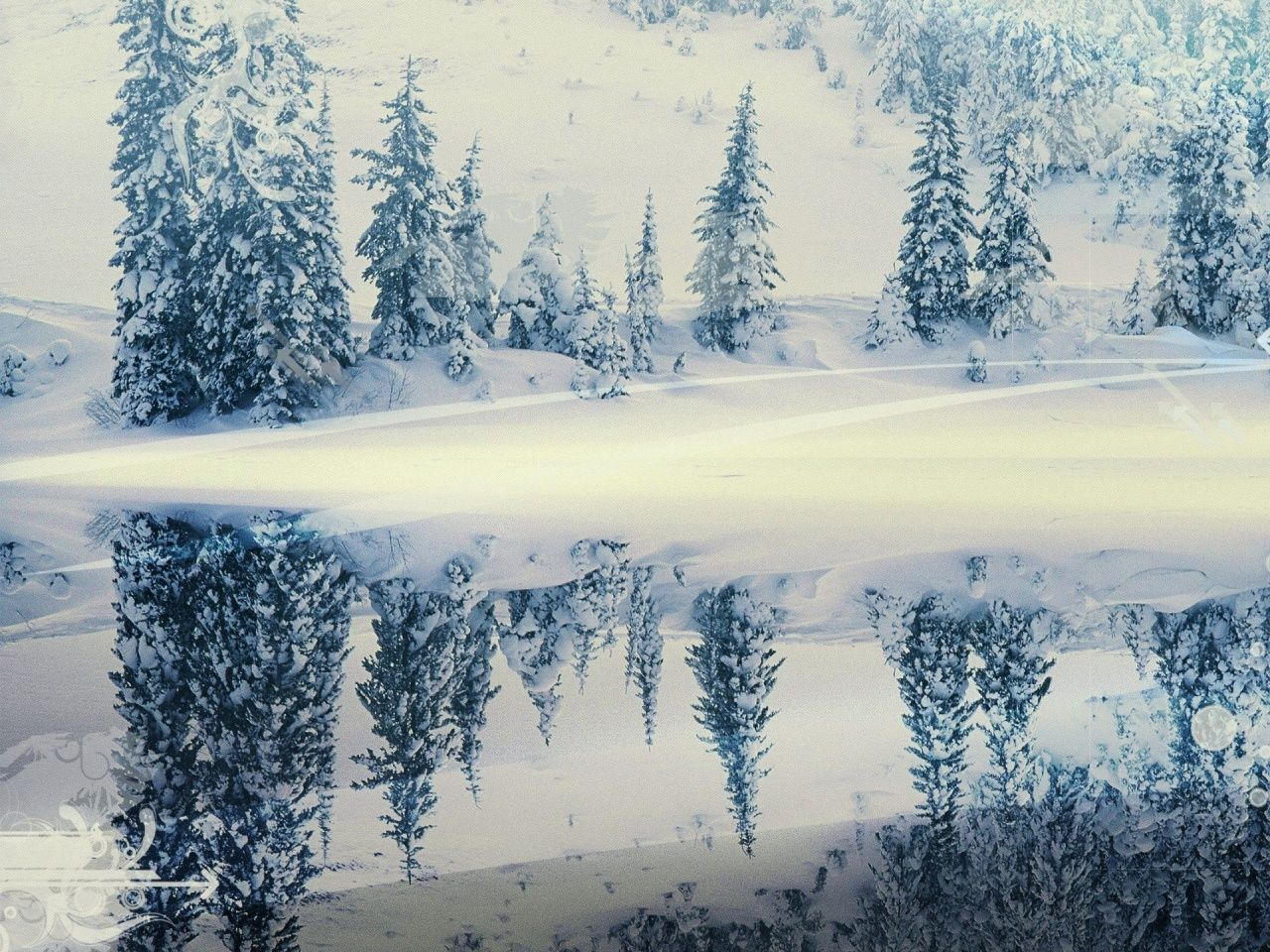 Reflection fir trees lake winter cold colors dullness