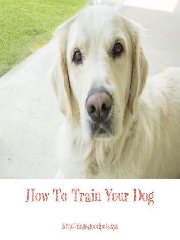 Dog Whisperer Tips On Jumping Dogs Dogs Dog Whisperer Tips