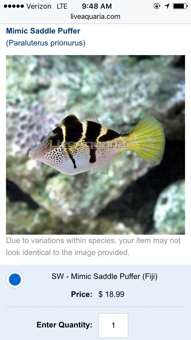 Pin By Shahaylie Smarr On Aquarium Saltwater Aquarium Fish Marine Aquarium Aquarium Fish